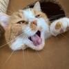 【猫学】猫が口を開けて呼吸をしていたらご注意!猫の口呼吸について。