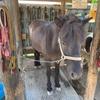 またこの子に会いたい!乗りたい!渋川動物公園で馬に乗る!!