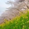 『2019年の私の桜』総集編