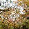 紅葉鮮やか、マゼノ渓谷 南小国町で一般開放