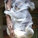 コアラのお家づくり
