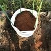 秋まきで大浦太牛蒡の袋栽培に挑戦
