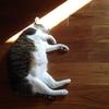 猫ちゃんの便秘 脱水症状は大丈夫? 腎臓は衰えてない? さまざまな原因を考えてみよう!