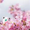河津桜を見に行ってきたよー!