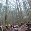 【2021親子登山①】武甲山に登る ー霧の樹林帯に生命の息吹を感じるー