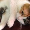 遠く離れて暮らす娘家族が我が家にきます。娘は猫アレルギー!!!