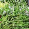 肴の山菜料理 『今年最後の山菜』