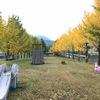 黄色いイチョウのある公園は別世界みたいだった