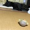 甲斐犬サンとネェネの関係性を省みる〜_φ(・_・