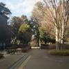 息子とお散歩。冬散歩② ~石神井公園ボート池方面より~