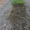 ジャンボ落花生の収穫