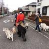 犬たちのダイバーシティ