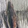 流出! 強姦変態米国偽木々文具品使用作製