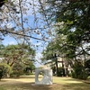 【東京都庭園美術館の桜の開花状況】200円で楽しむサクラとアート