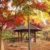 和子の散歩-1・・・