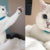 致命的な可愛さのため175万ポンドの猫