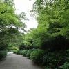 神戸森林植物園。キビタキ(メス)、ソウシチョウ(?)、コゲラ、ホオジロ、ヤマガラ。