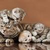 富山で猫を虐待していたクズへの嫌悪感が凄い件