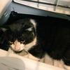 野良猫観察記⑤ ハチワレちゃん保護から1週間