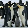 ペンギンの味