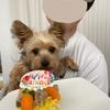 モカの誕生日🎂