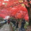 丹沢大山の秋の絶景「大山もみじ祭り」の美しい紅葉