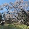 佐久の桜だより