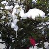 雪晴れの朝