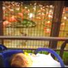 Pママ、赤ちゃんの虫除け対策【室内編】