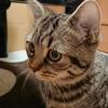 ~魅力ある猫共生住宅~猫に学ぶ⑤ 猫の子供への好影響