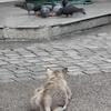散歩に行って、タイ猫(ホワイト)と遊ぶ