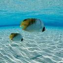 私だけの小さな海
