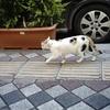 素晴らしきトルコ旅〜トルコの猫は人懐っこい?!〜
