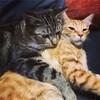 愛猫は本能に目覚めた