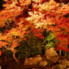 【kogasanaのフォトギャラリー】紅葉ライトアップ写真