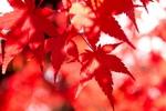 もみじと苔の絶景の日本庭園!秋の箱根で一番の紅葉の名所「箱根美術館」