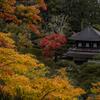 色づき始めの京都の紅葉を撮ってきた