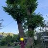 令和最初の神社詣(鎌倉・江ノ島)