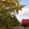 頭が温暖化しちゃう、ハーフカメラ写真と今年の初紅葉撮り