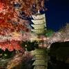 【東寺ライトアップ】京都今季最後の見納めライトアップ✨