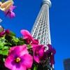 保険の見直しは無料相談、【東京都】お勧めの保険ショップ!