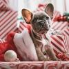 寝ながらできる就活方法 クリスマスと正月くらいは休みたい就活生へ