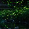 滋賀県日野町のホタルと天の川