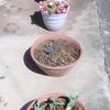 ぼちぼちな庭仕事の進み具合
