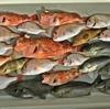 珍魚にビックリ❗ まったりと「エサ釣り五目」で遊んできました~🎵 【 春の日本海フィッシング 】