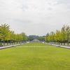 昭和記念公園_ひまわりを撮ってきました【SIGMA 35mm/50mm F1.4 DG HSM】
