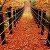 紅葉の名所…花貫渓谷