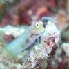 オーストラリア グレートバリアリーフ② ~世界最大のサンゴ礁と魚たち~