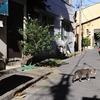 東京都下町猫一丁目。