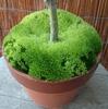 苔の生長著しい三月中旬